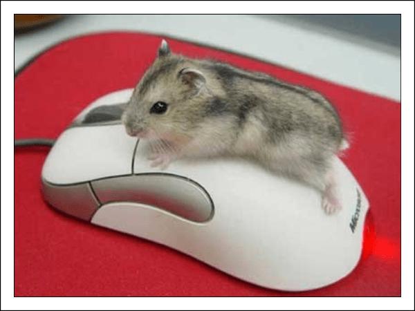 Как настроить чувствительность мыши в windows (Виндовс) 10?